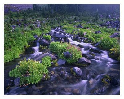 Paradise River with wildflowers, Mount Rainier National Park, Washington-Tim Fitzharris-Art Print