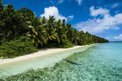 Paradise White Sand Beach in Turquoise Water on Ant Atoll, Pohnpei, Micronesia, Pacific-Michael Runkel-Photographic Print