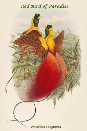 https://imgc.artprintimages.com/img/print/paradisea-sanguinea-red-bird-of-paradise_u-l-pqpg9x0.jpg?p=0