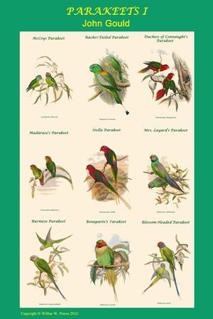 https://imgc.artprintimages.com/img/print/parakeet-classroom-poster-vertical-i_u-l-pqpga80.jpg?p=0