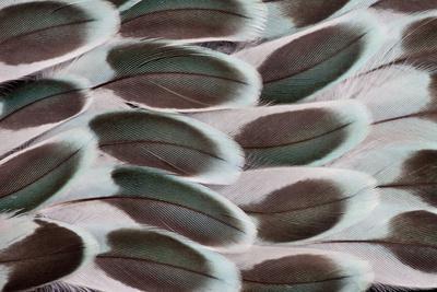 https://imgc.artprintimages.com/img/print/parakeet-wing-feather-design_u-l-q12t2710.jpg?p=0
