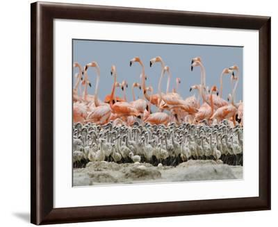 Parents leave their young in a creche and go in search of food.-Klaus Nigge-Framed Photographic Print