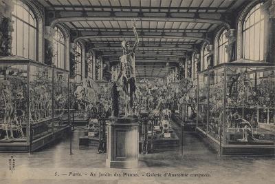 Paris, Jardin Des Plantes--Giclee Print