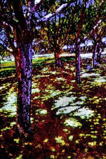 Park-Andr? Burian-Photographic Print