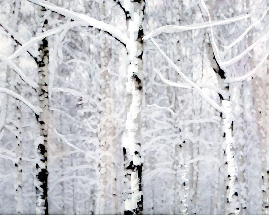 parker-greenfield-birch-forest-winter