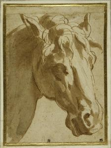 The Head and Neck of a Horse by Parmigianino
