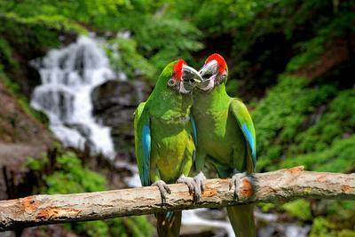 https://imgc.artprintimages.com/img/print/parrot-against-tropical-waterfall-background_u-l-q105k3g0.jpg?p=0