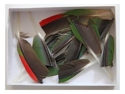 Parrot Feathers, no. 1-Judy Tuwaletstiwa-Premium Giclee Print
