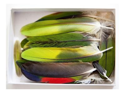Parrot Feathers, no. 2-Judy Tuwaletstiwa-Premium Giclee Print