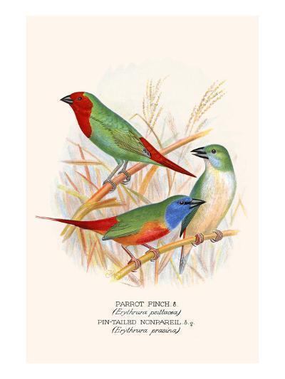 Parrot Finch-F^w^ Frohawk-Art Print