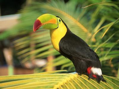 Parrot in Bird Park, Bay Islands, Hd-Tom Stillo-Photographic Print