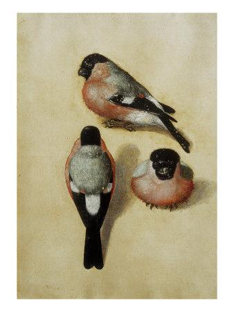 https://imgc.artprintimages.com/img/print/parrot-in-three-positions_u-l-p9ag610.jpg?p=0