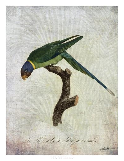 Parrot Jungle IV-John Butler-Giclee Print