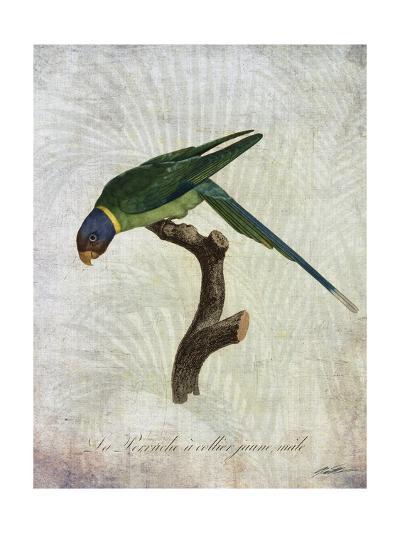 Parrot Jungle IV-John Butler-Art Print