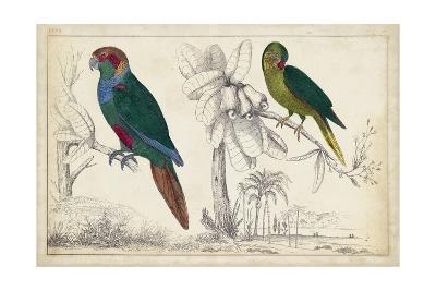 Parrot Pair I--Art Print