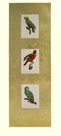 Parrot Panel I-Jacques Barraband-Art Print