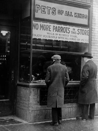 Parrot Shortage--Photographic Print