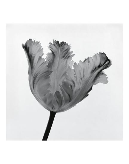 Parrot Tulip I-Tom Artin-Art Print