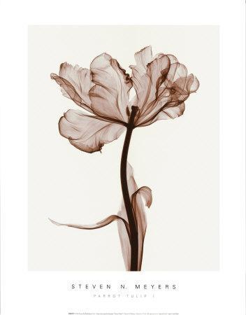 https://imgc.artprintimages.com/img/print/parrot-tulips-i_u-l-ekxqa0.jpg?p=0
