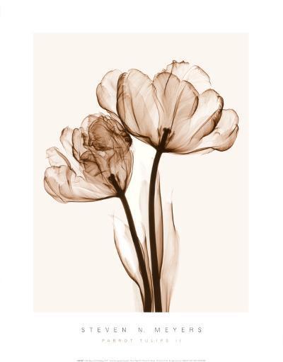 Parrot Tulips II-Steven N^ Meyers-Art Print