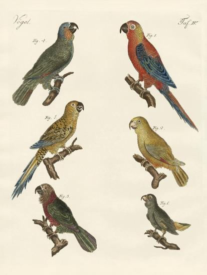 Parrots of the New World--Giclee Print