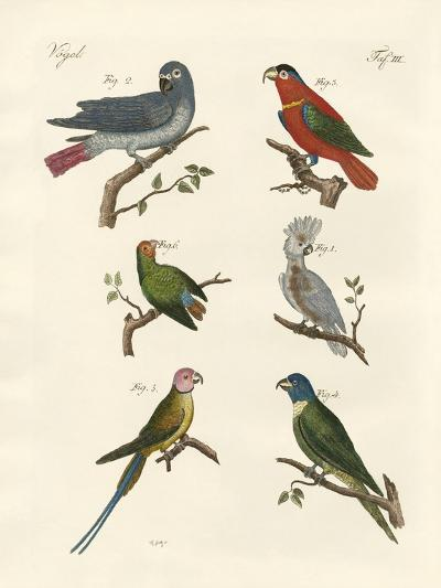 Parrots of the Old World--Giclee Print