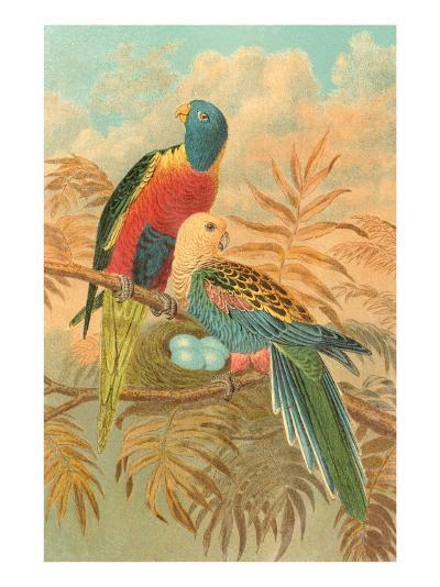 Parrots--Art Print