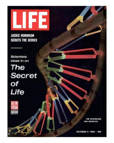Partial DNA Helix Model, Advances in Gene Research, October 4, 1963-Fritz Goro-Premium Photographic Print