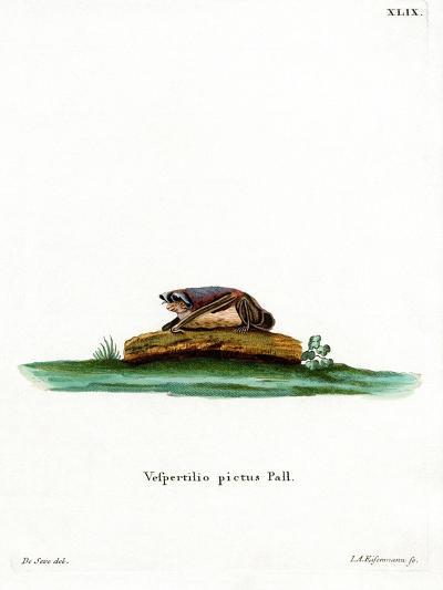 Particoloured Bat--Giclee Print
