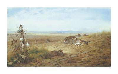 Partridges and Goldfinch-Archibald Thorburn-Premium Giclee Print