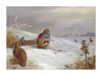 Partridges and Hare-Archibald Thorburn-Premium Giclee Print