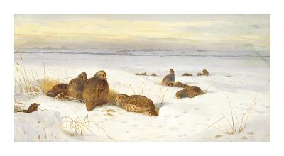 Partridges in a Winter Landscape-Archibald Thorburn-Premium Giclee Print