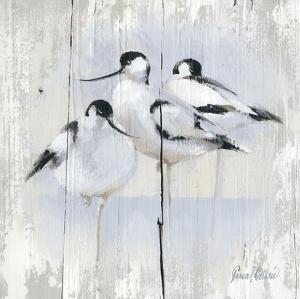 3 Oiseaux by Pascal Cessou