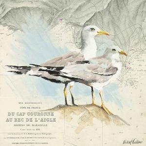 Mouettes Cap Couronne by Pascal Cessou