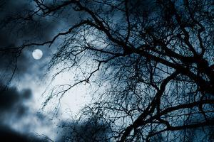 Scary Dark Scenery with Naked Trees, Full Moon and Clouds by pashabo