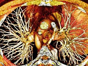 Heart And Lungs, 3D CT Scan by PASIEKA