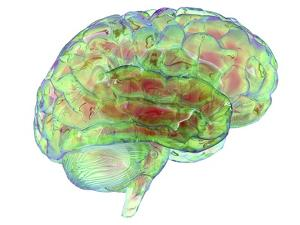 Human Brain,computer Artwork by PASIEKA
