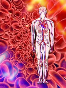 Human Circulatory System, Artwork by PASIEKA
