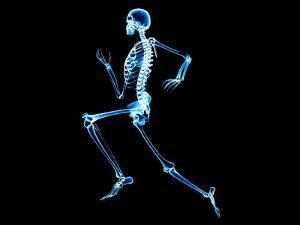 Human Skeleton by PASIEKA
