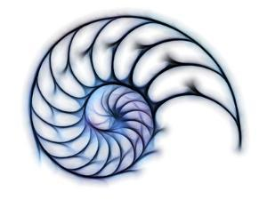 Sectioned Shell of a Nautilus, Artwork by PASIEKA