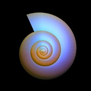 Snail Shell, Artwork by PASIEKA