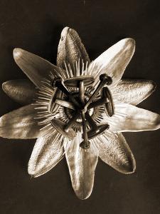 Passiflora, 1929 (photogravure)