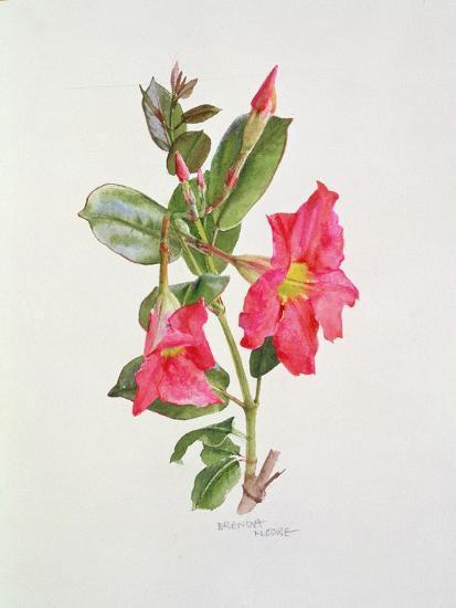 Passiflora Princess Eugenia, C.1980-Brenda Moore-Giclee Print