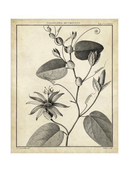 Passiflora VI-Charles Francois Sellier-Art Print