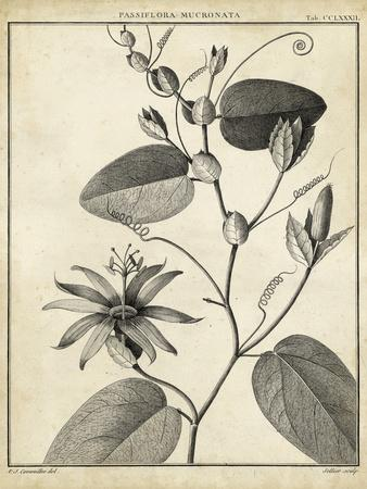 https://imgc.artprintimages.com/img/print/passiflora-vi_u-l-pnc03k0.jpg?p=0