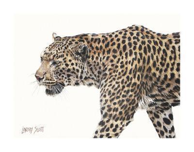 Passing Leopard-Lindsay Scott-Art Print