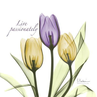 Passionately Tulip-Albert Koetsier-Premium Giclee Print
