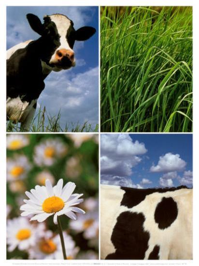 Pastoral Cow-Panais & Morcime Dumoulin-Art Print