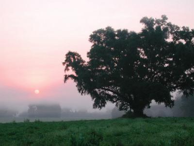 Foggy Sunrise and Oak Tree by Pat Canova
