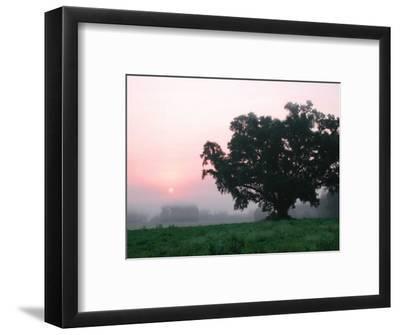 Foggy Sunrise and Oak Tree